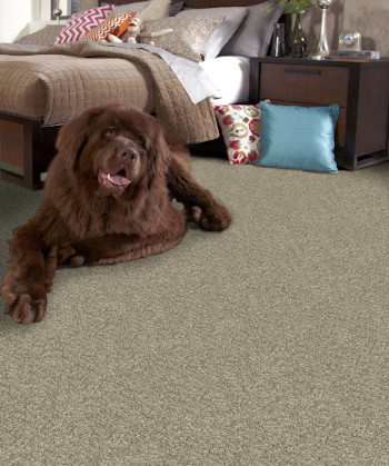 Beale Street Stainmaster Carpet